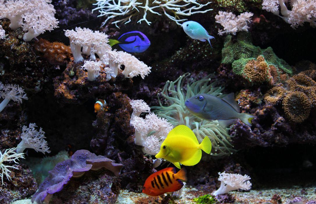 underwater aquarium fish coral wallpaper