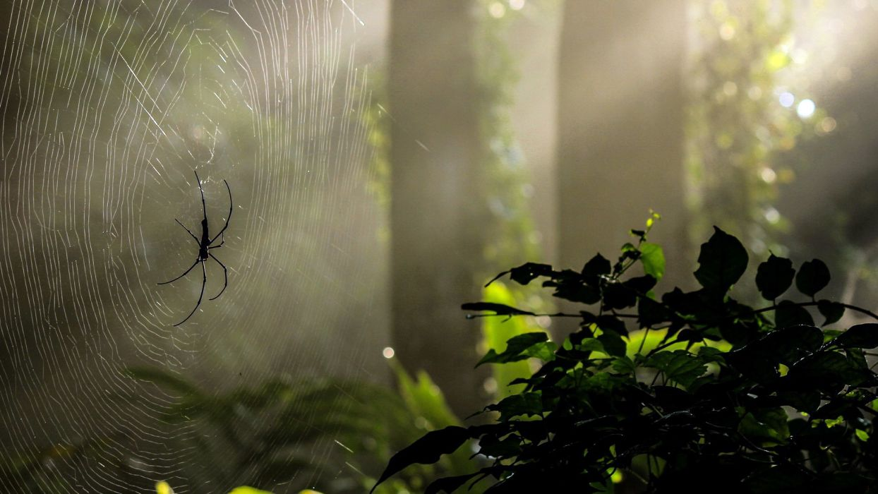Forest nature green tree spider spiders light rays web wallpaper