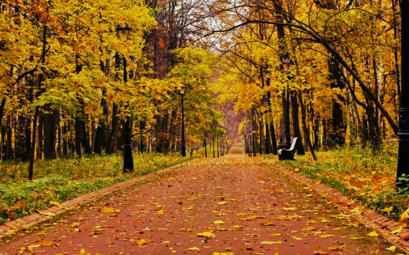 Park forest alone bench bench mood autumn fall wallpaper