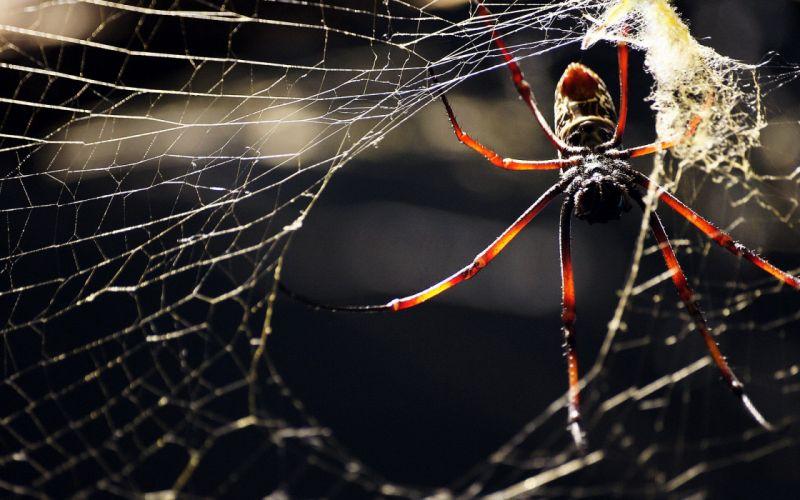 webs spiders web spider wallpaper
