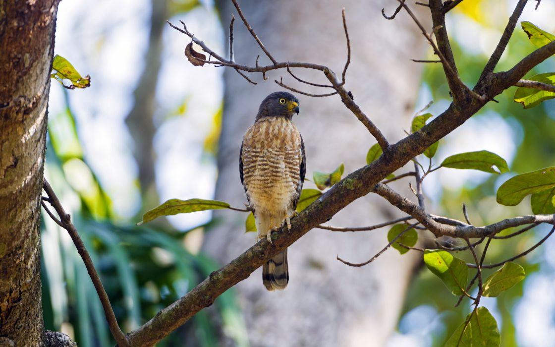 bird  tree  background wallpaper