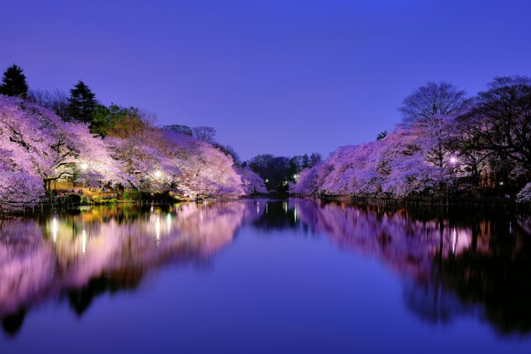 japan park city Osaka lake lights lighting reflection wallpaper