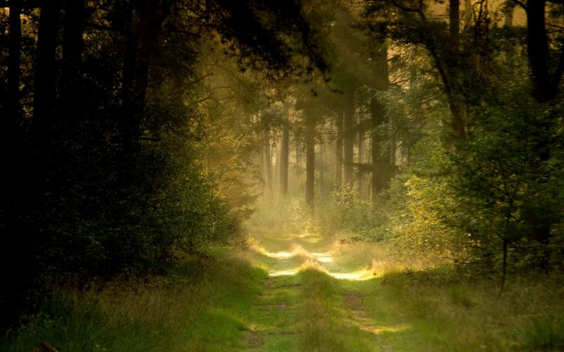 landscapes nature forests path wallpaper