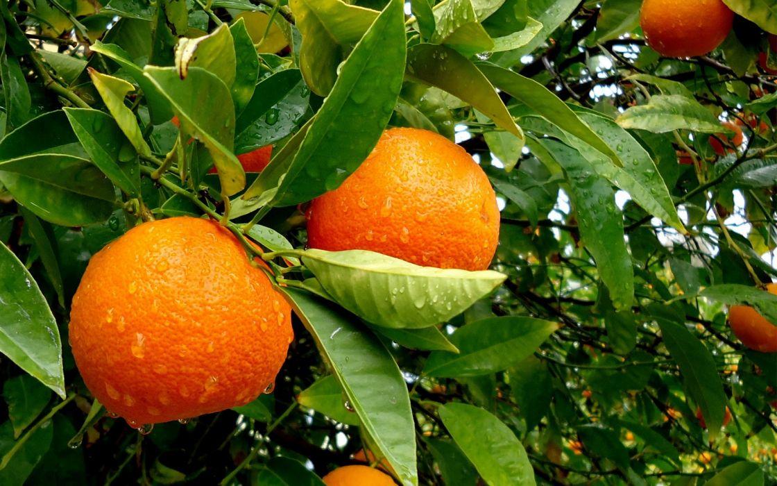 Fruits - Orange wallpaper