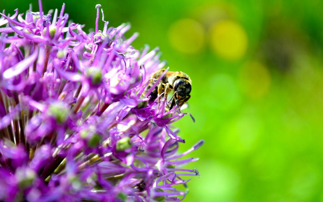 flowers  bees  summer wallpaper