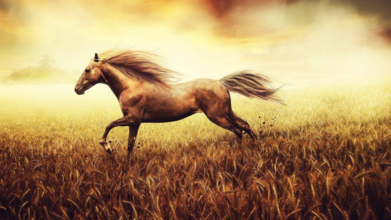Horse Field Wheat wallpaper