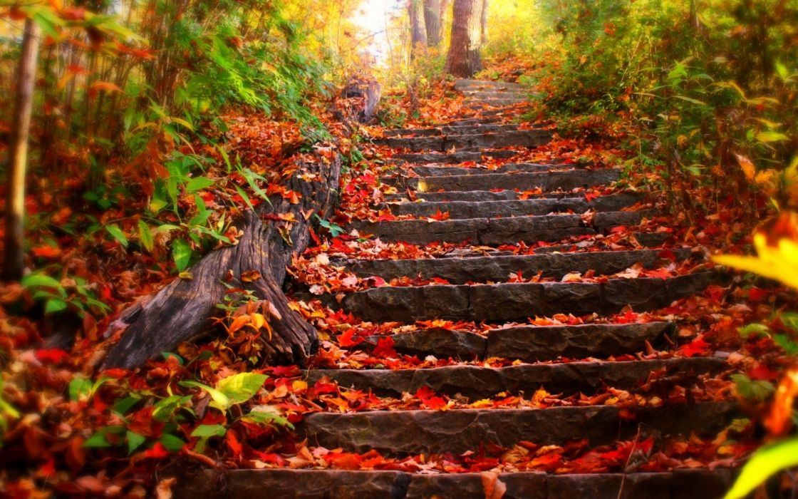 stairs park trees leaves autumn fall wallpaper