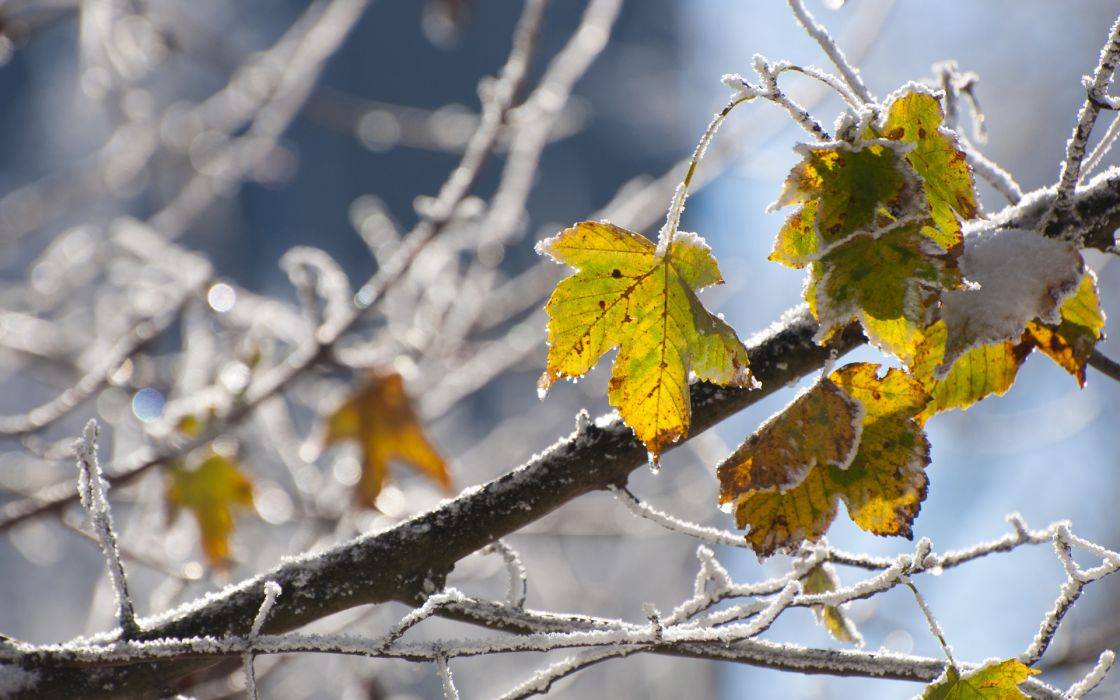wood  leaves  cold  frost  snowflakes autumn fall wallpaper