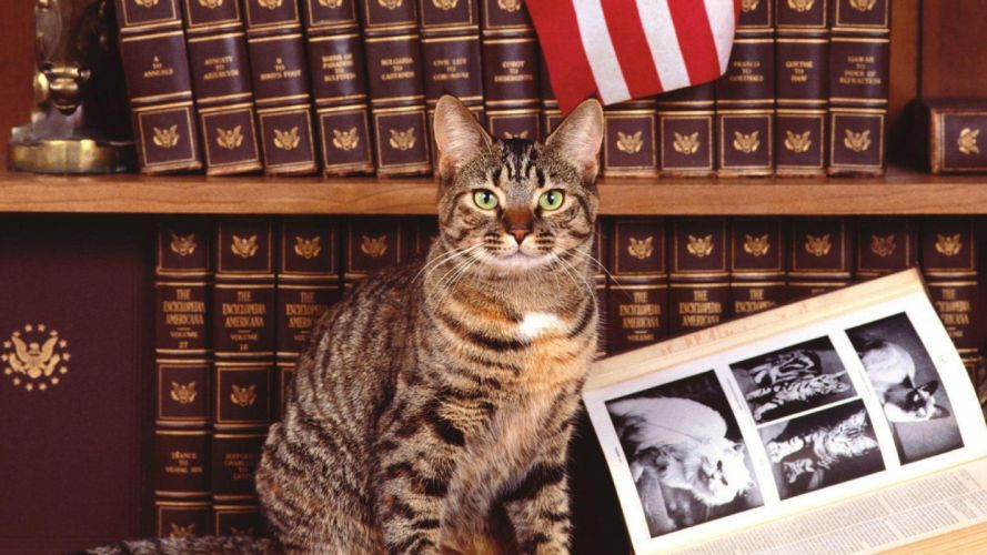book books cat tabby wallpaper