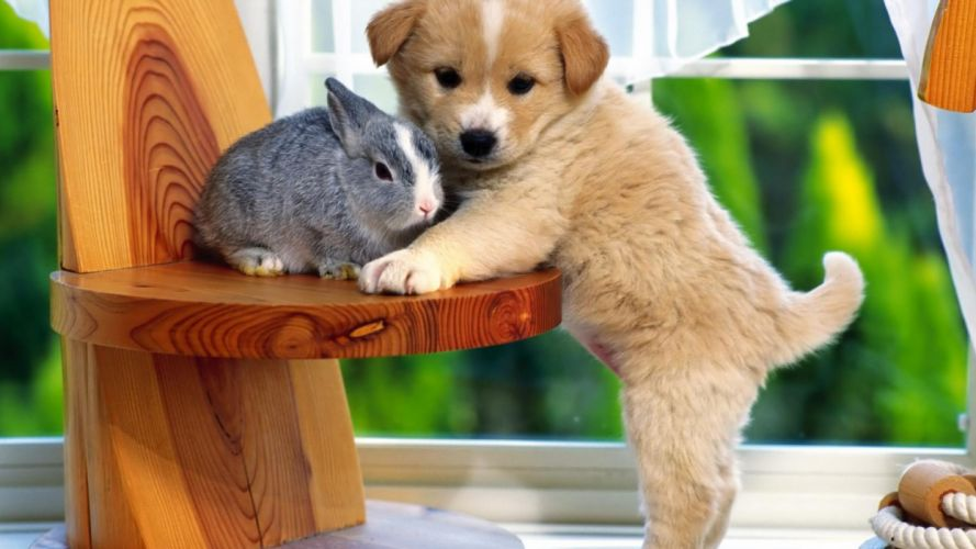 bunny rabbit cute puppy wallpaper