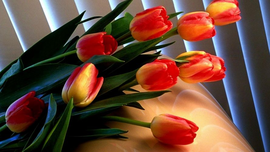 red tulips green flowers wallpaper