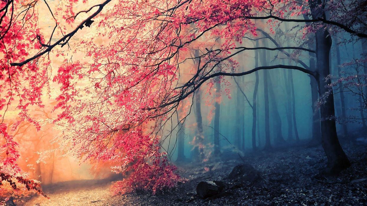 a forest trees fog autumn wallpaper