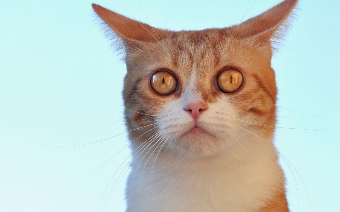 Animals Cat wallpaper
