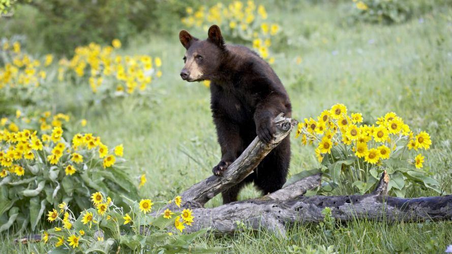 bear flowers bears wallpaper