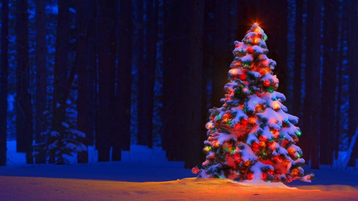 Christmas Tree Lights Bokeh Forest Trees Snow Winter Color Wallpaper
