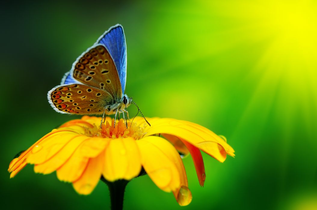 Close-up wallpaper butterfly insect flower drops yellow green bright  wallpaper