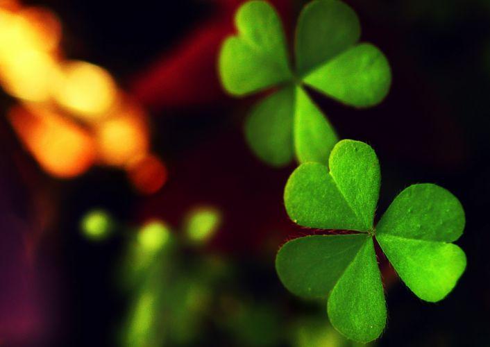 close-up green leaf clover leaf bokeh wallpaper