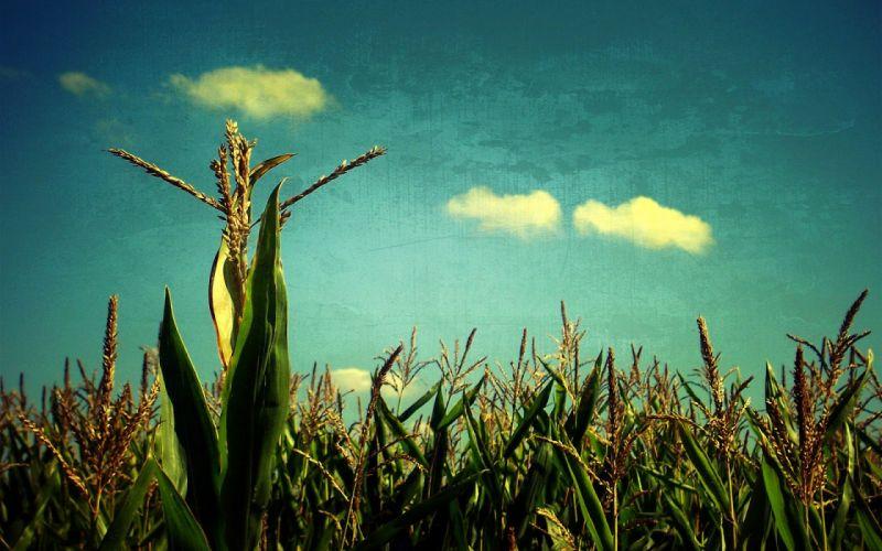 corn vintage wallpaper