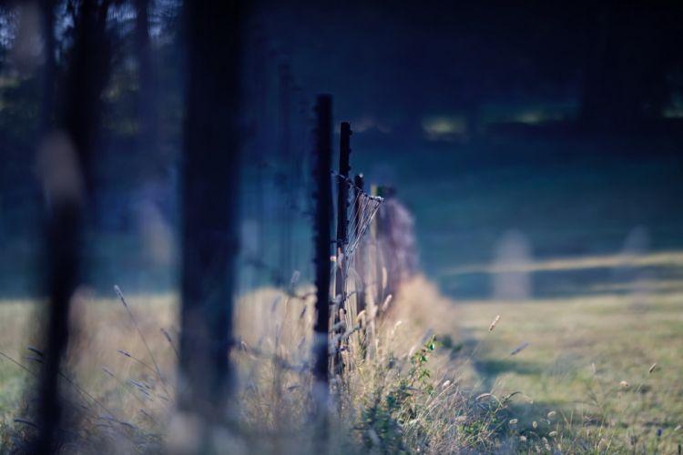 fence grass macro wallpaper