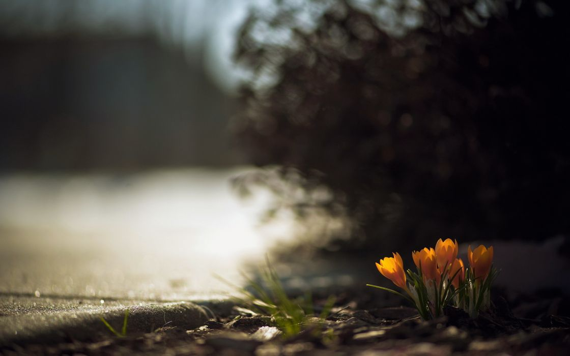 flowers  morning  lake  landscape mood wallpaper