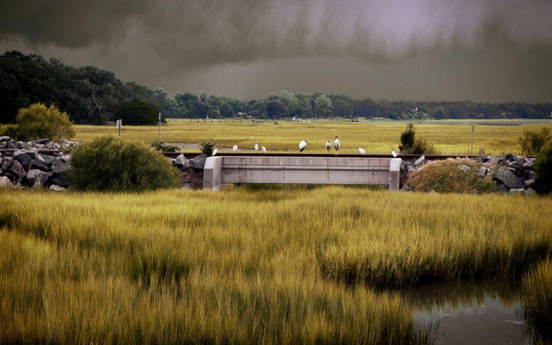 Grass Birds storm rain wallpaper