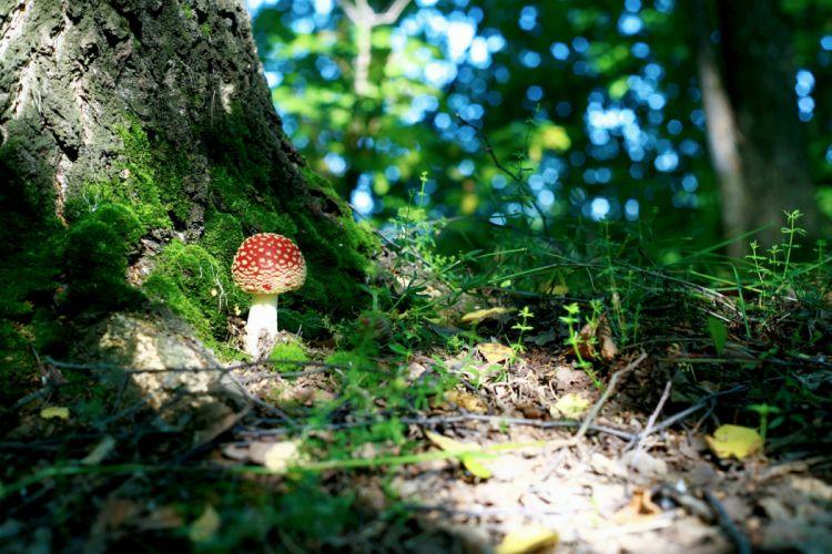 green macro forest moss leaves mushroom tree wallpaper