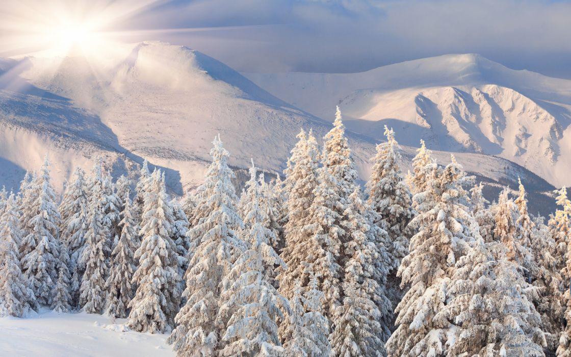 hill  dawn  hills  sun  forest  snow  winter wallpaper
