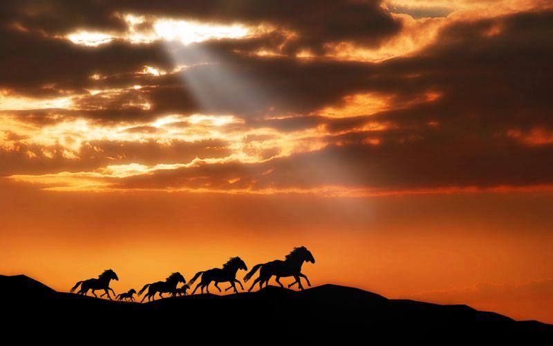 horse horses wallpaper