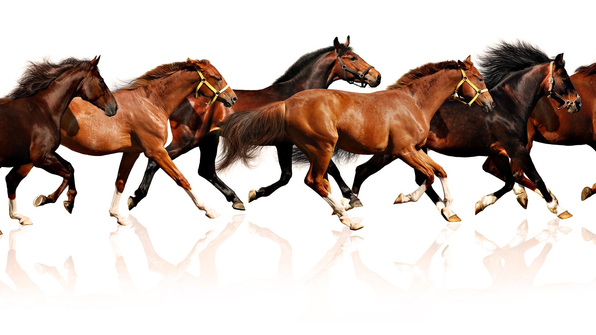 7 White Running Horse Wallpaper Gaurani Almightywind Info