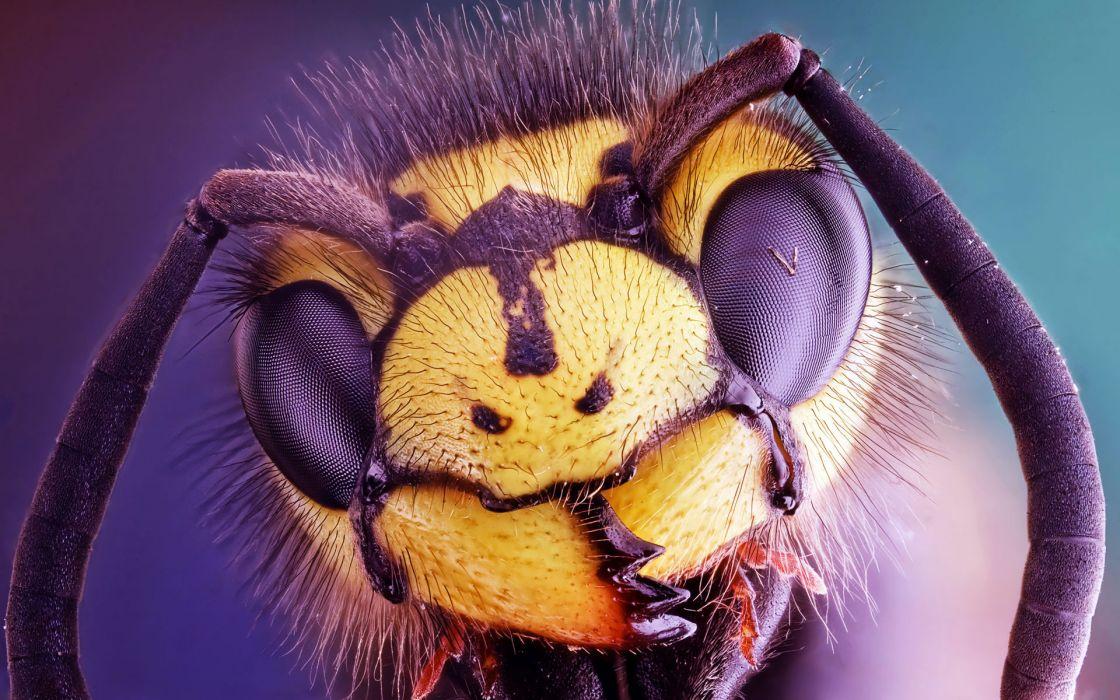 insect  macro  head  eyes face eyes wallpaper