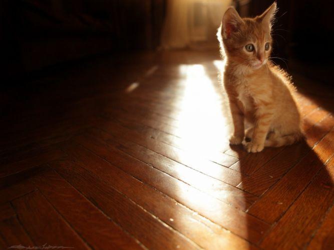 light floor sun red cats Animals Cat kitten wallpaper