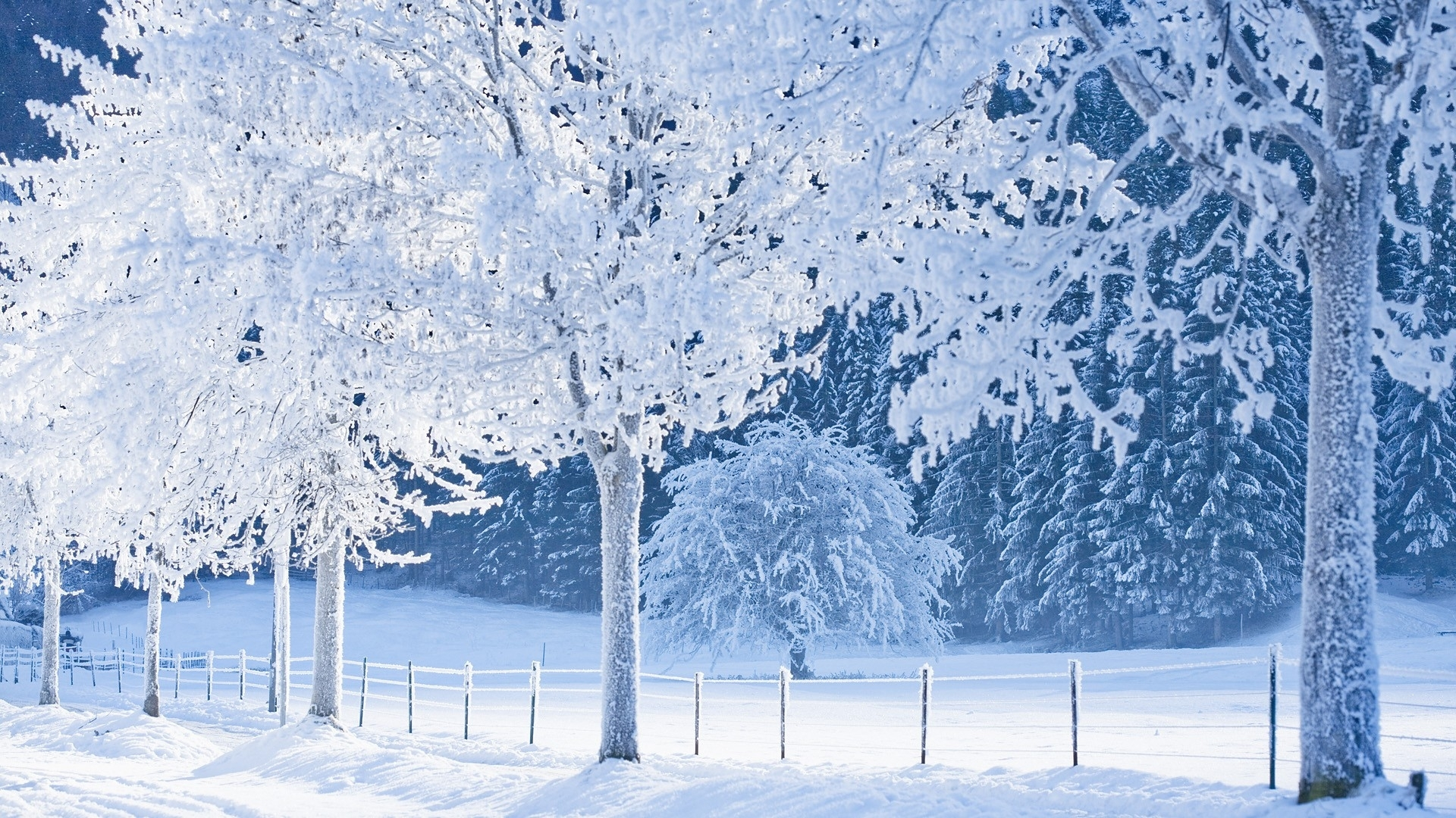Nature Snow White World Germany Bavaria Winter Wallpaper 1920x1080 123742 Wallpaperup