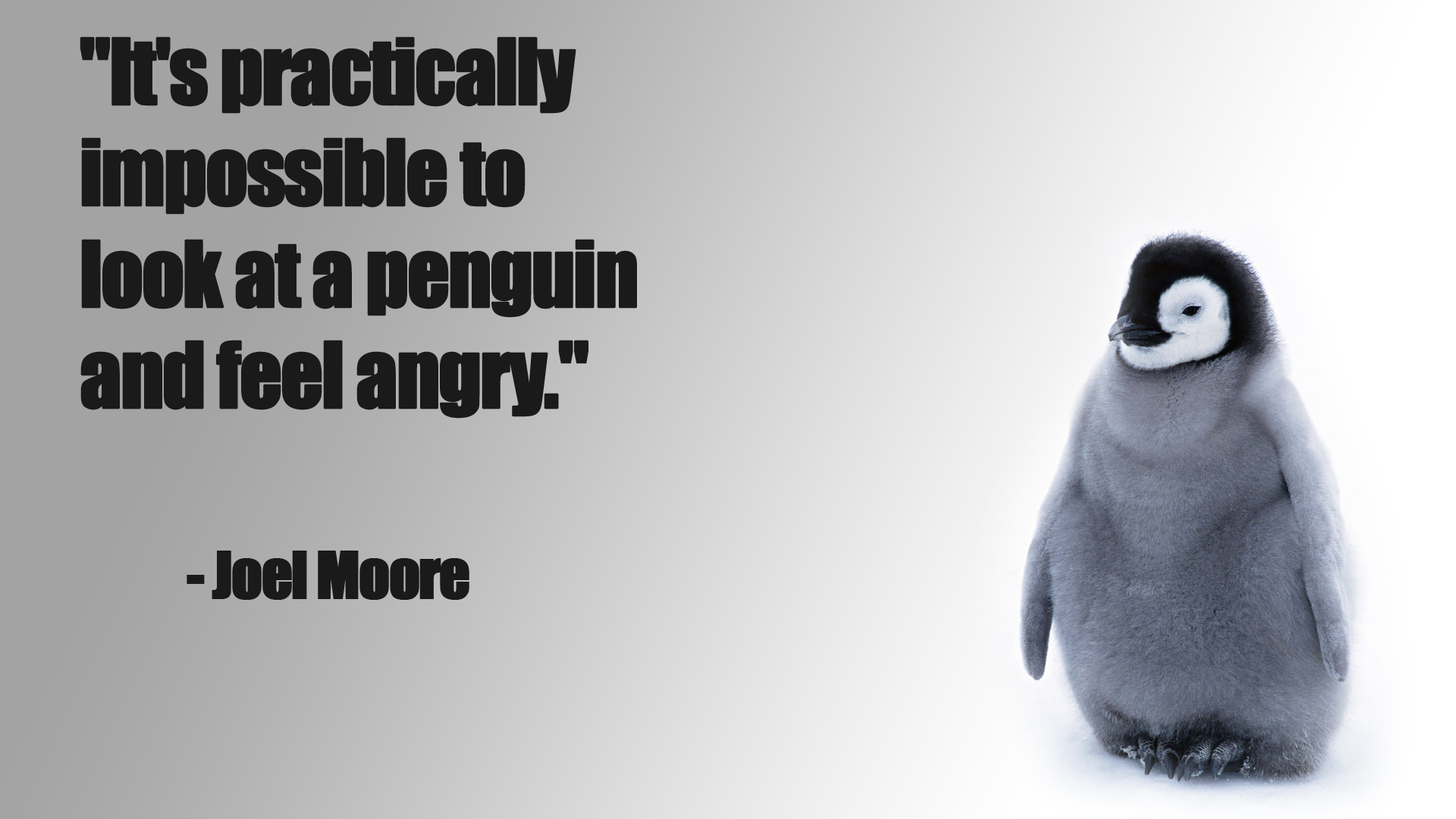 Baby Chicken Quotes: Penguin Funny Baby Chick Snow Cute Wallpaper