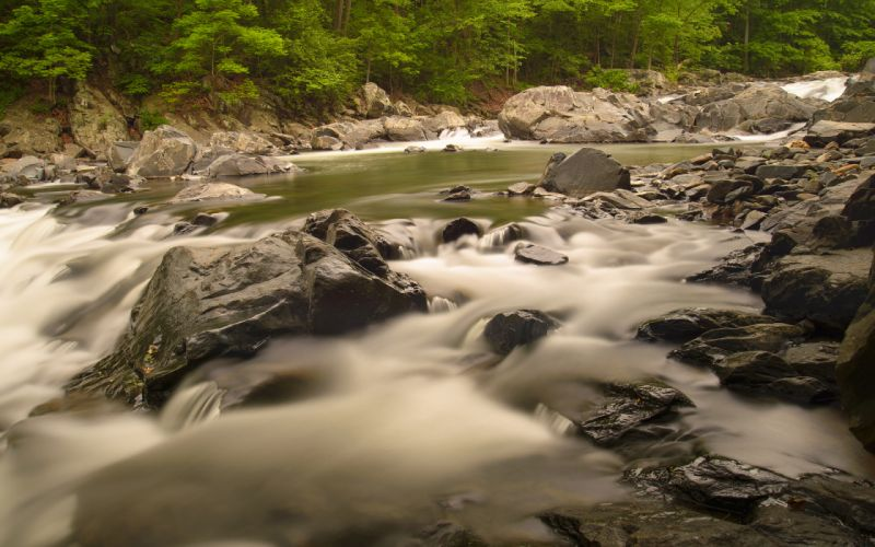 River Rocks Stones Forest Trees wallpaper