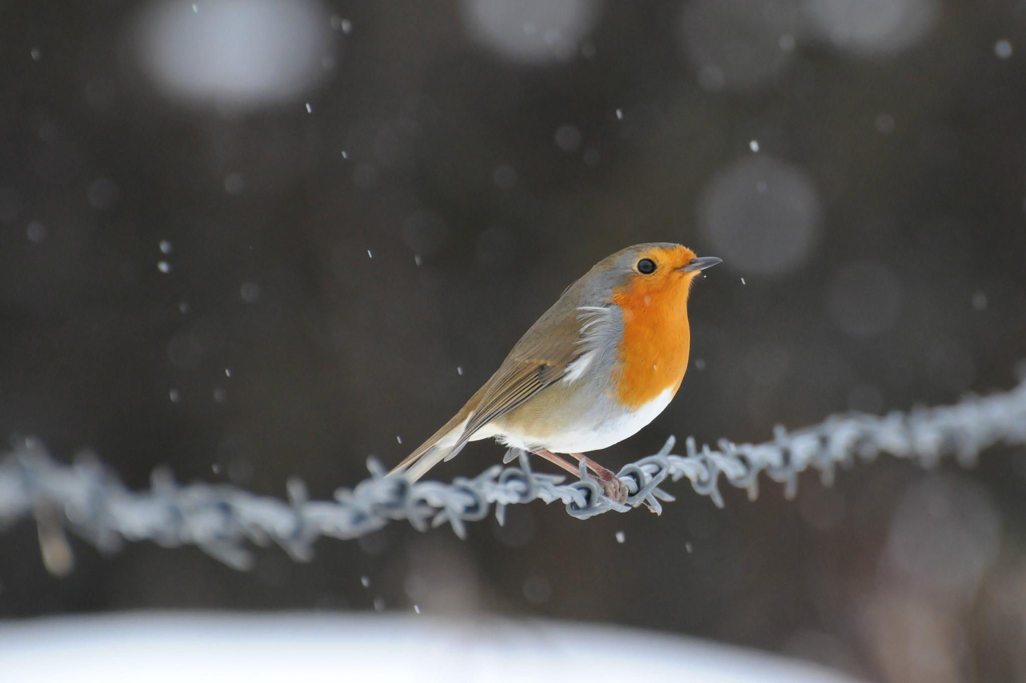 птички на снегу  № 101482 бесплатно