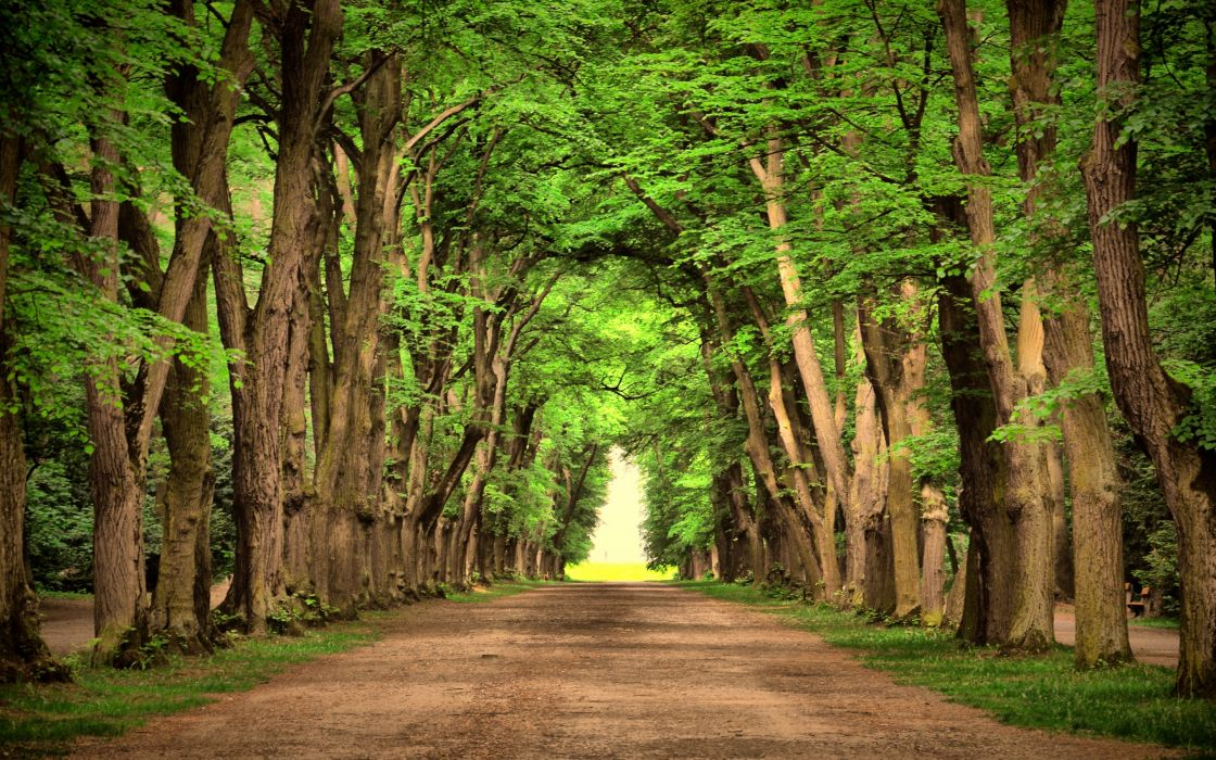 Road Green Trees Beautiful Landscape Nature Wallpaper