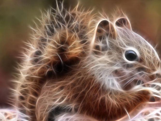 squirrels chipmunks chipmunk squirrel fractal wallpaper