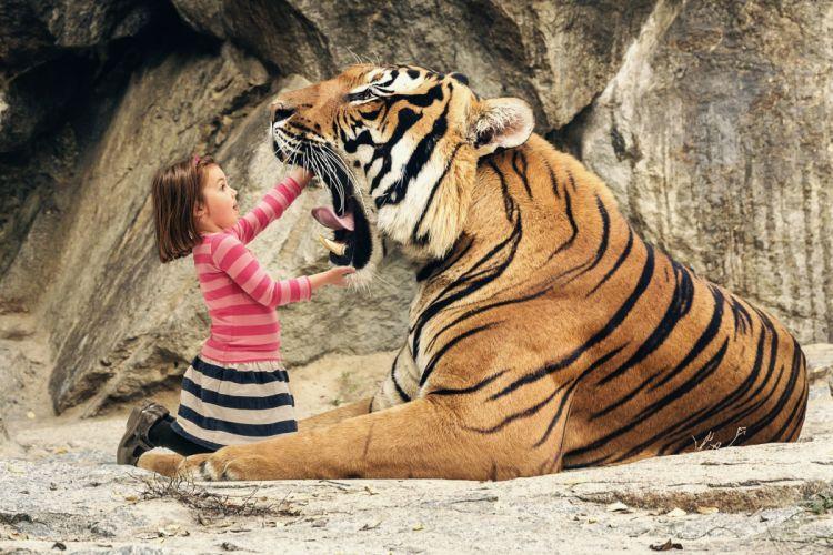tigers mouth girl tiger humor dark wallpaper