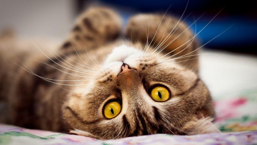 whiskers cat eyes wallpaper