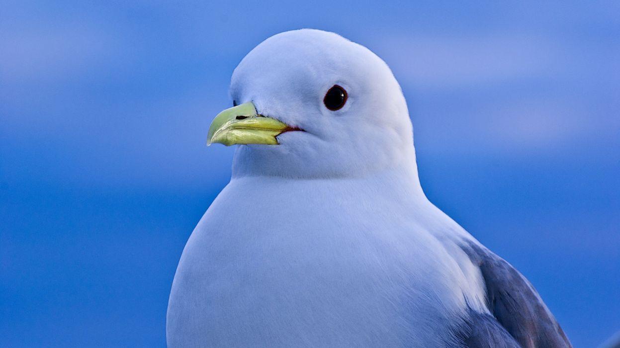 bird seagull sea view wallpaper