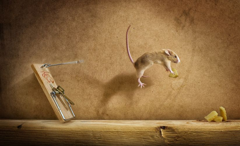 Mousetrap mish flight cheese Mouse wallpaper