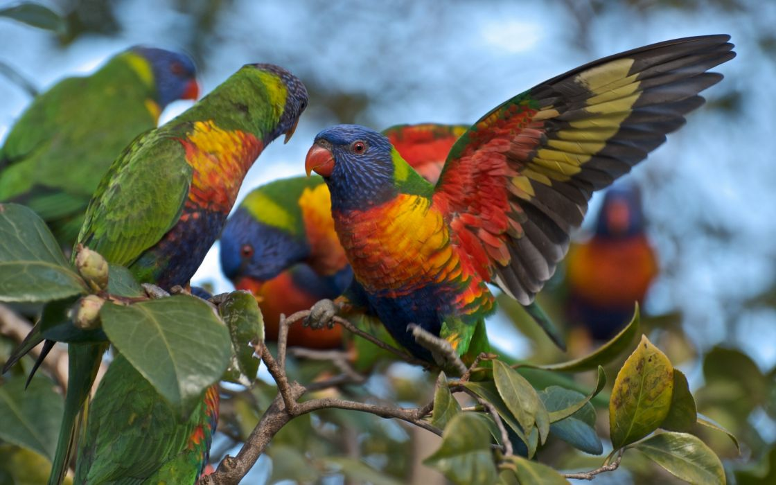 Multicolor lorikeet parrot branch wallpaper