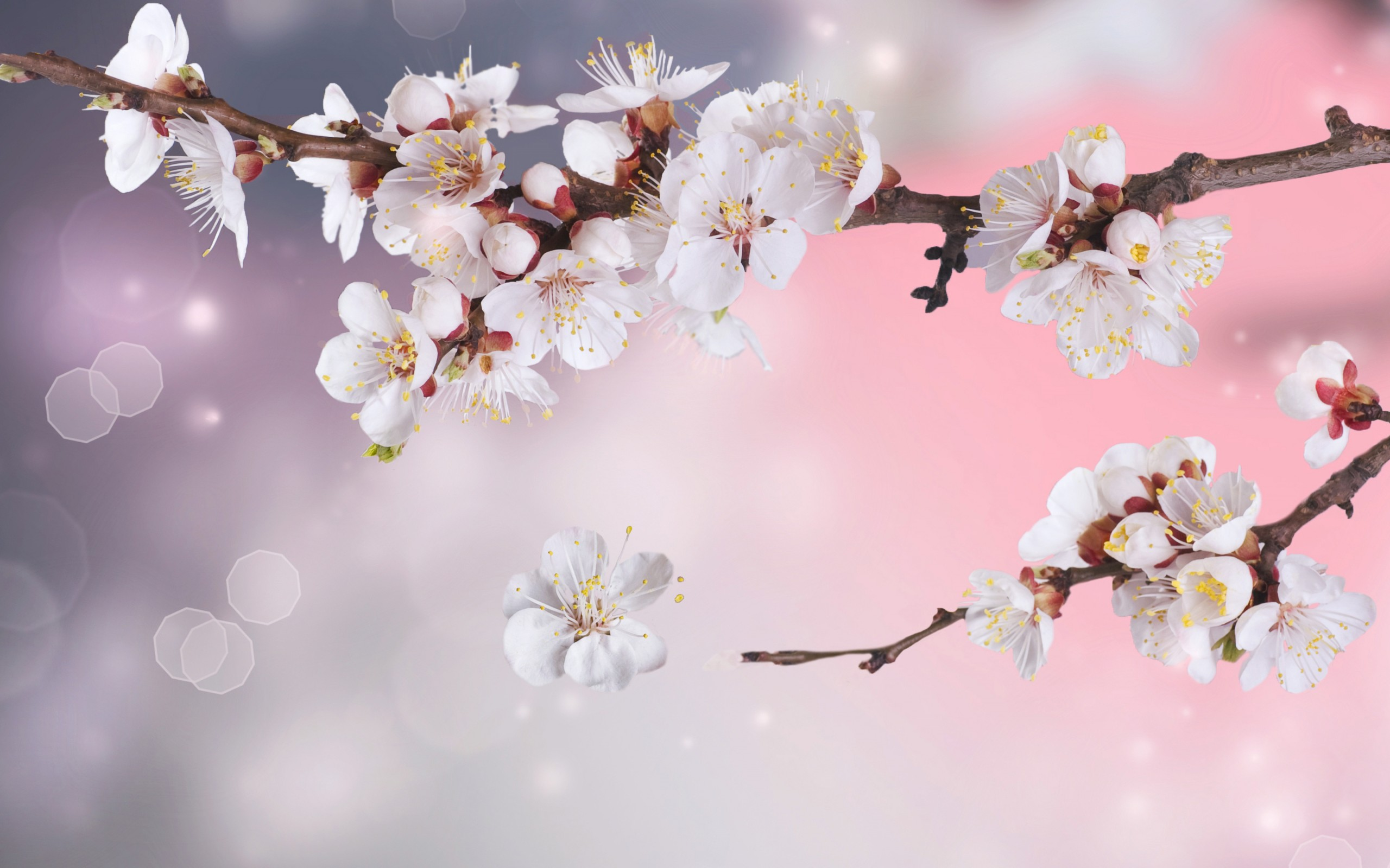 Apple Tree Flowers Branches Petals Sparkle Bokeh Blossoms Wallpaper