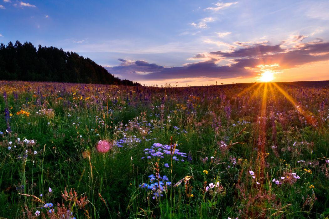 Colorado meadow sunset flowers    f wallpaper