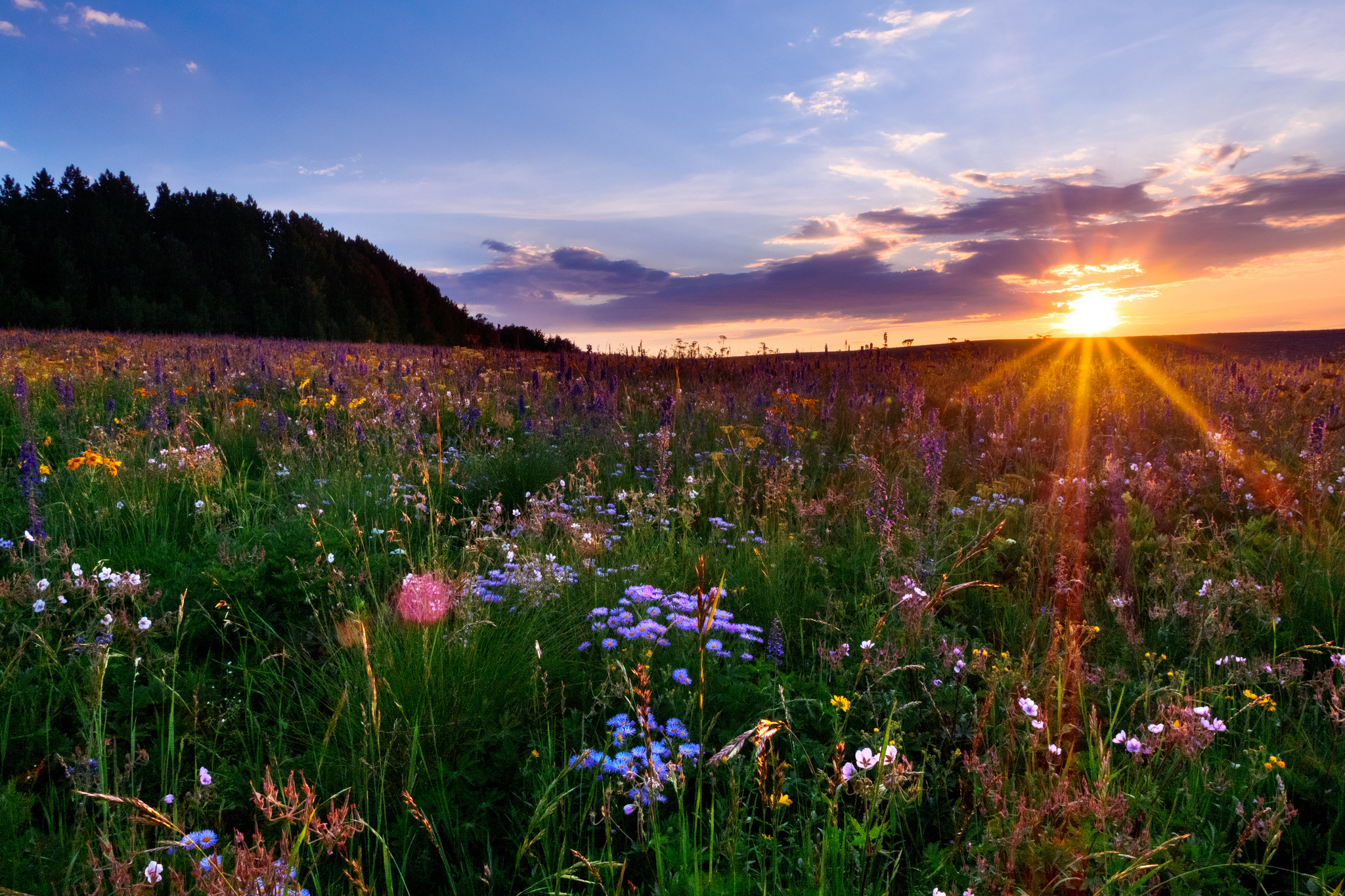 Statues Of Gods Colorado Meadow Sunset Flowers F Wallpaper 2048x1365