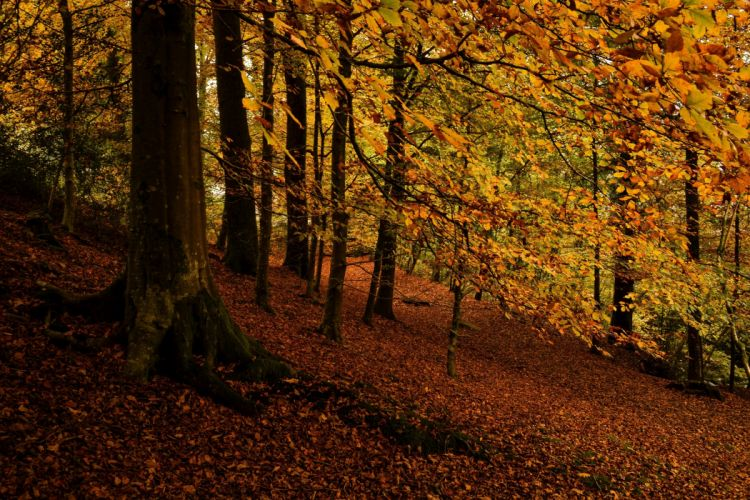 forest trees leaves autumn wallpaper