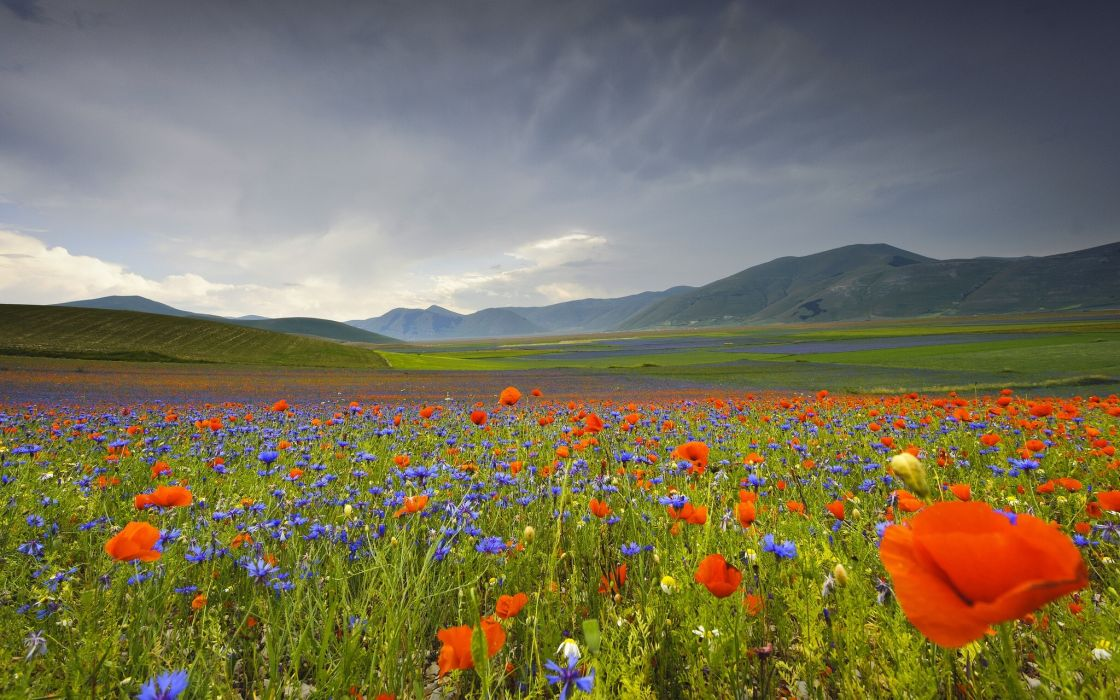 Italy Landscape Flowers Poppies Cornflowers Mountains Meadow Wallpaper