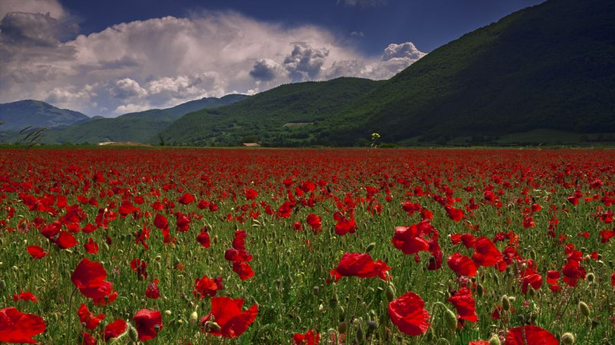 mountains field poppies nature wallpaper