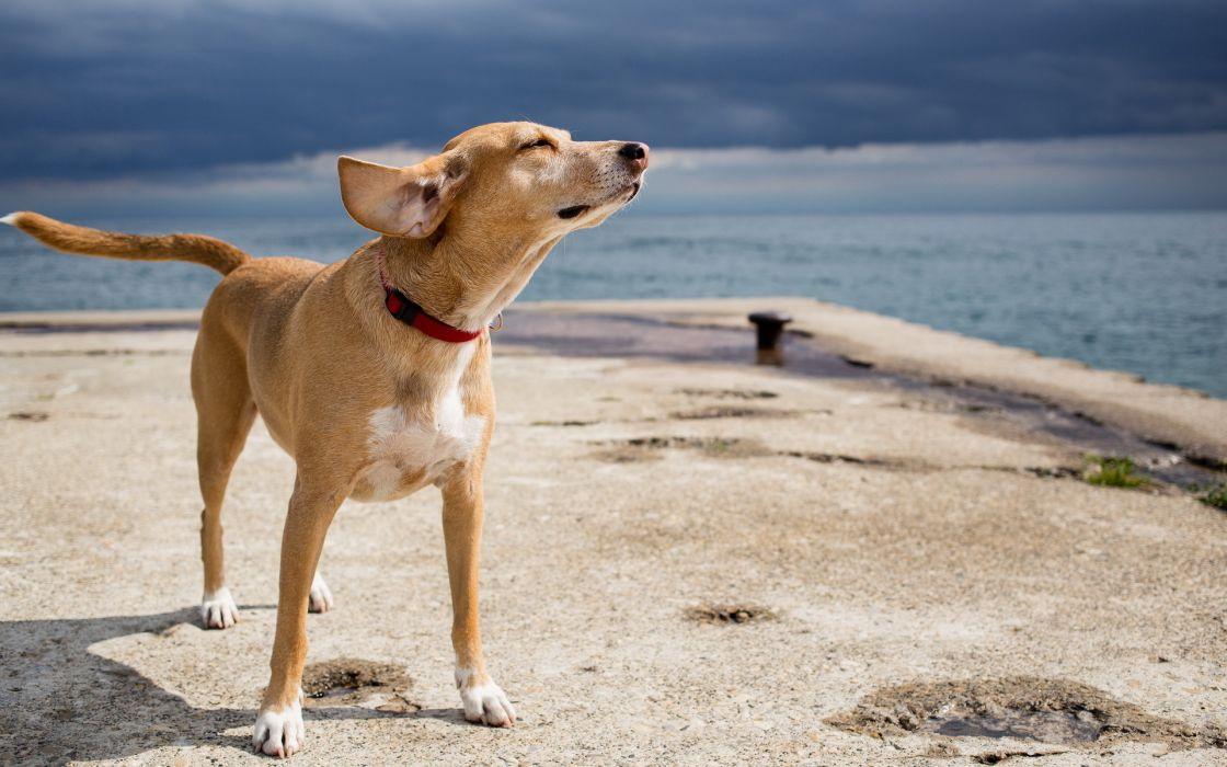 dog sea wallpaper