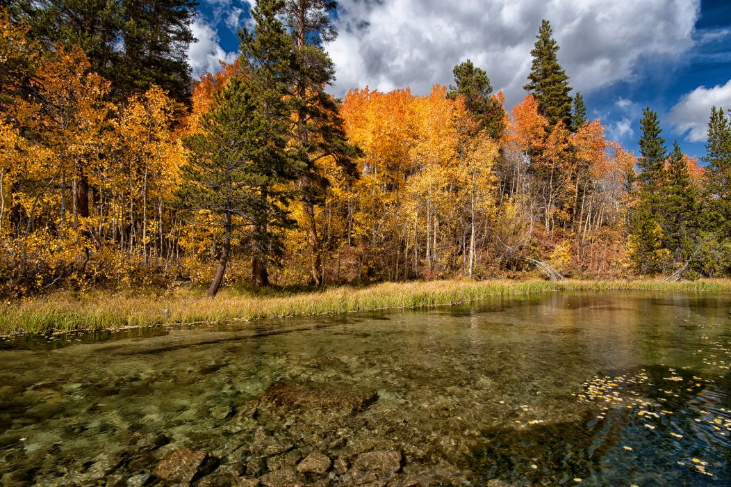 lake fall forest trees autumn wallpaper
